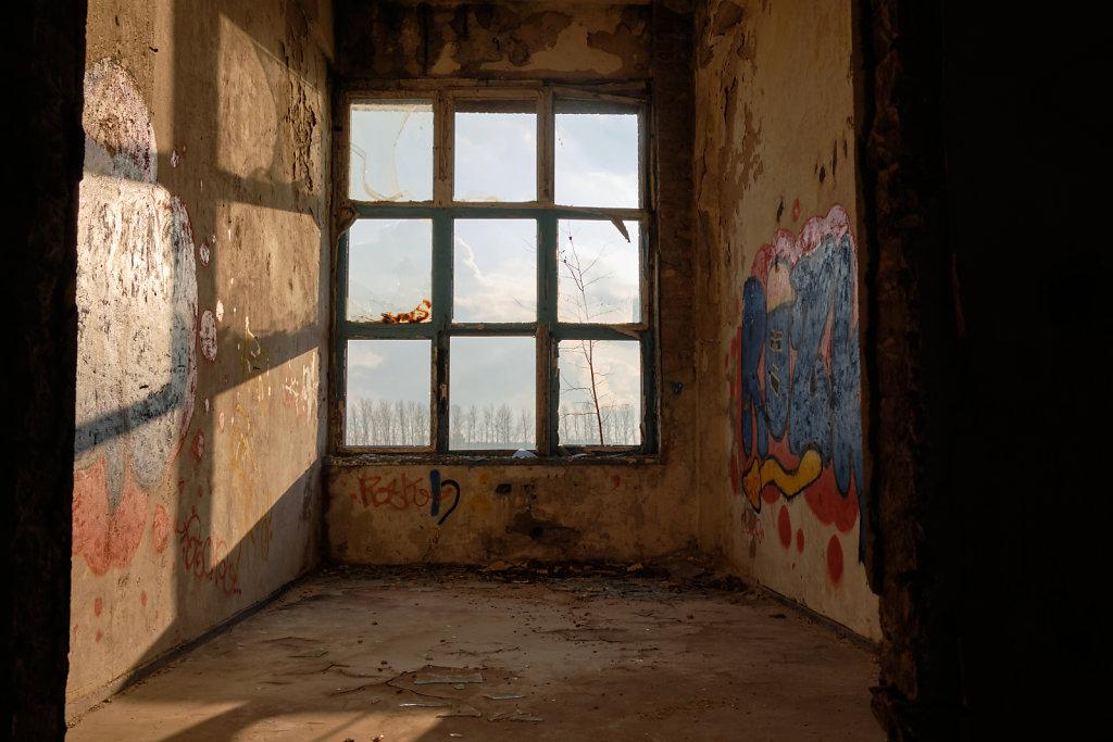 Through the Windows I