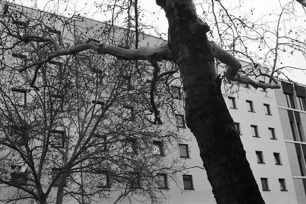 Der Baum umschlingt