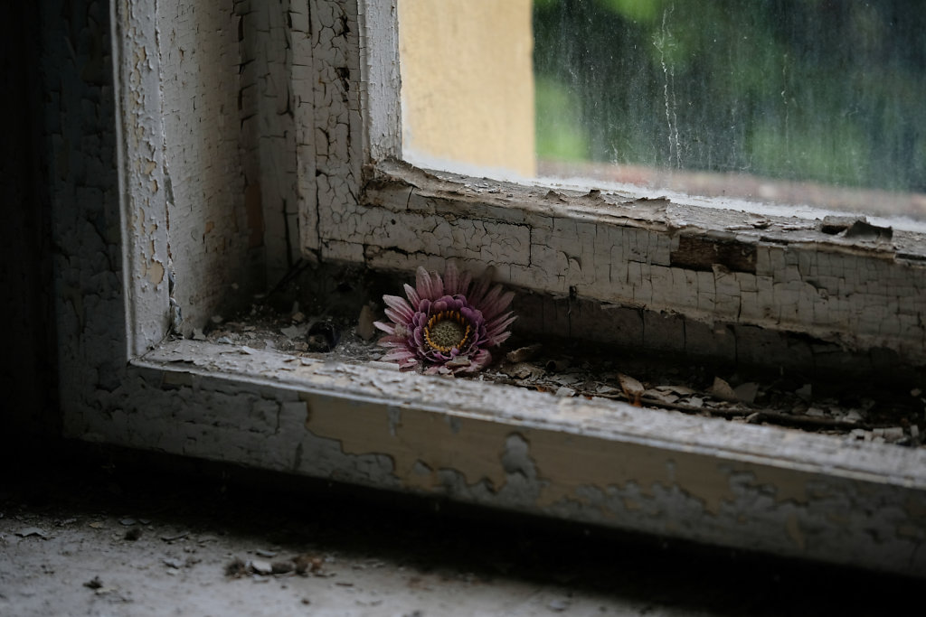 Old Flowers In Old Windows