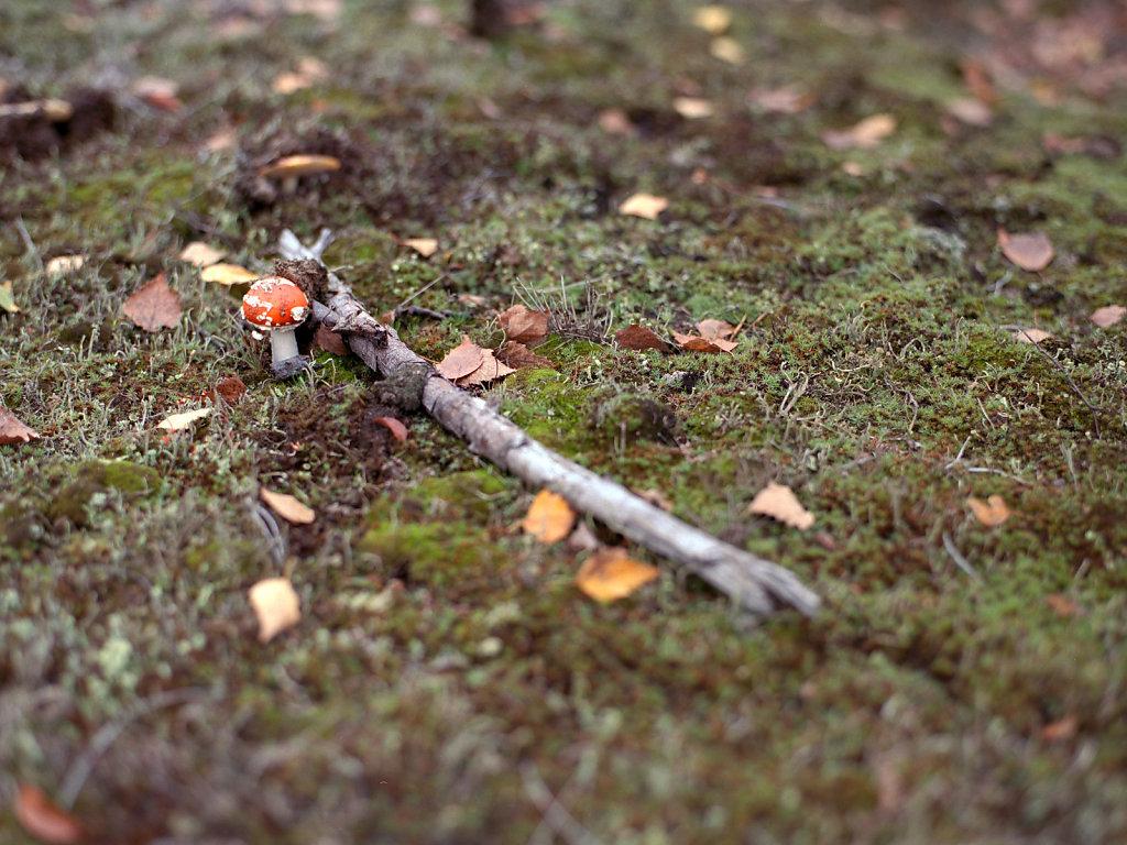 Der Pilz und das Holz