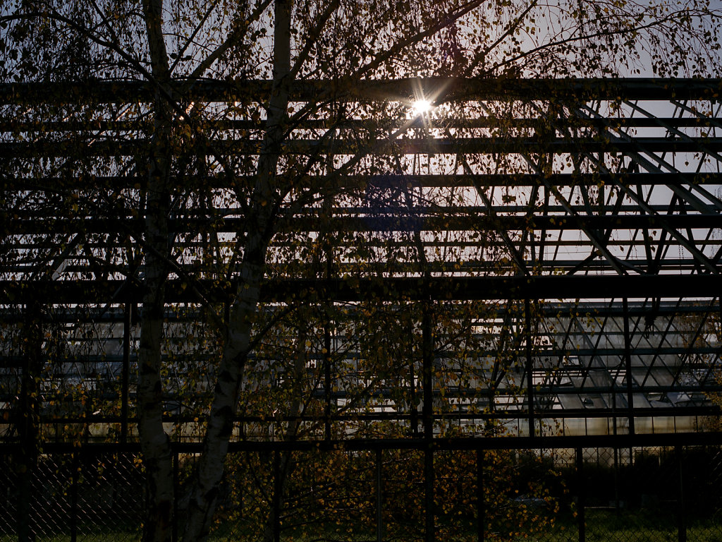 Bäume und Gewächshäuser