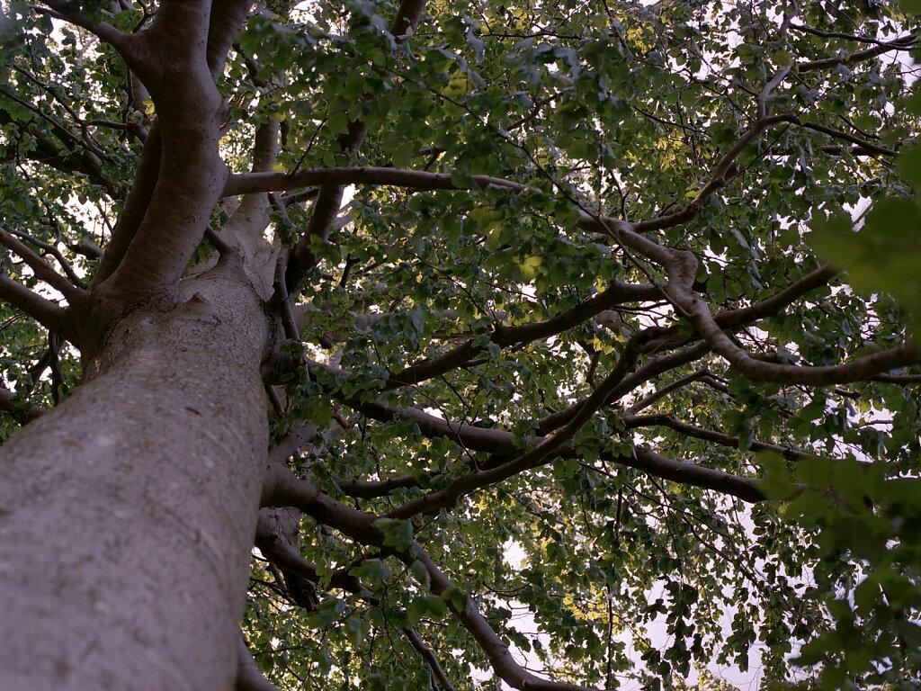 Baum im Portrait